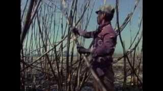 Cuando Tiemblan Las Montañas (Historia de la Guerra en Guatemala)