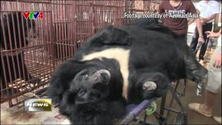 VTV4 - Vietnam strives to end the use of bear bile