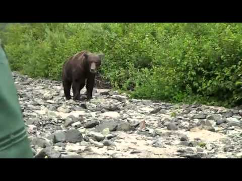 Scary Grizzly Bear Encounter