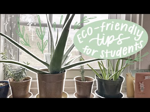 eco-friendly tips for students