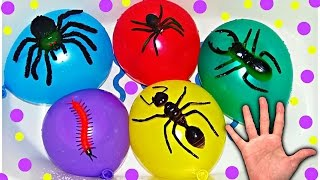 Water Balloons with Insects for Learning Colors For Babies