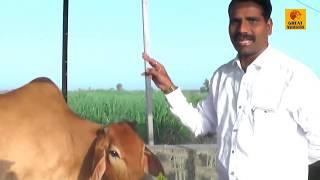 देशी गायीपासुन | दूध, तूपनिर्मितीसह जमिनीच्या सुपीकतेचे ध्येय | डाॅ. नंदकुमार जगताप यांची यशोगाथा |