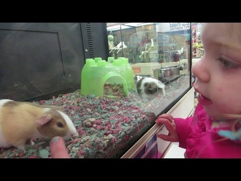 KINZ WANTED A GUINEA PIG │2•8•14 DAILY VLOG