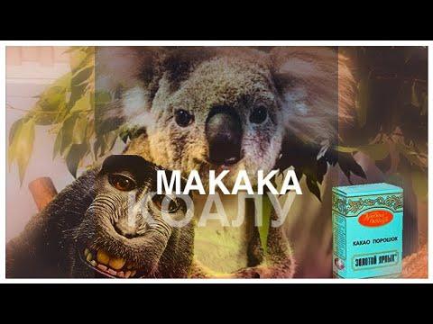 Макака коалу в какао / Скороговорки от диктора