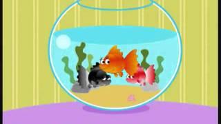 Video | Cá vàng bơi trong bể nước chế | Ca vang boi trong be nuoc che