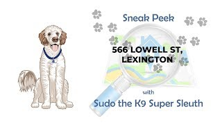 Sneak Peek with Sudo the K9 Super Sleuth - 566 Lowell St, Lexington