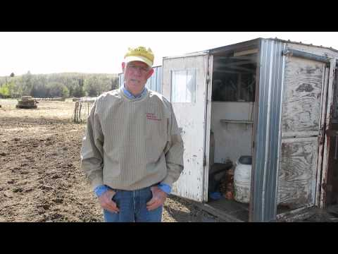 Cattle breeding in Nebraska