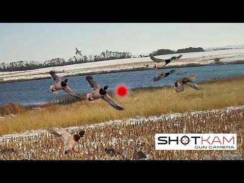 Duck Hunting Highlights – 74 Kills – with a ShotKam
