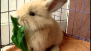 Feeding Time! I Sing to my Rabbit.