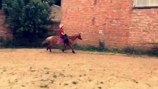Horsey girl xxx