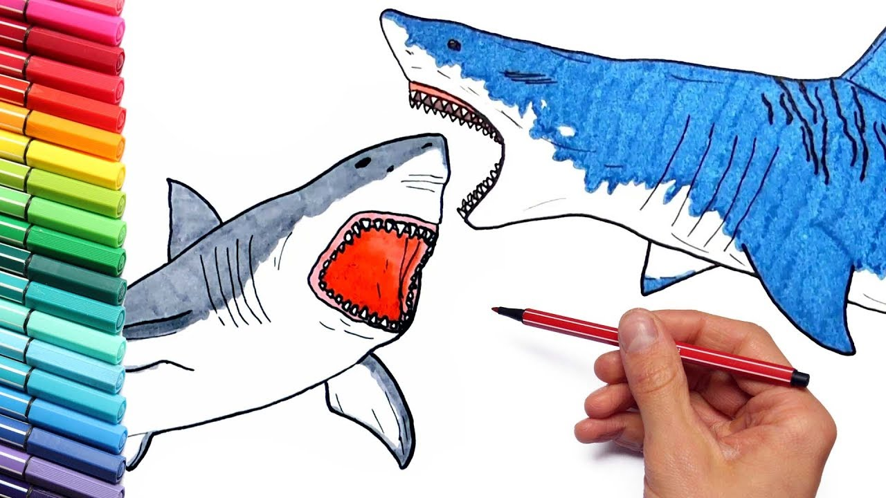 Megalodon Vs Shark Drawing And Coloring Pages For Children How To