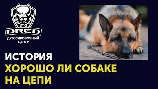 Поучительная история | Зачем заводите собаку? | Хорошо ли собаке на цепи