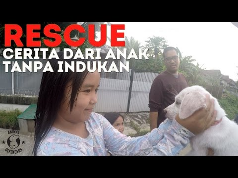 RESCUE: Cerita Dari Anak Tanpa Indukan