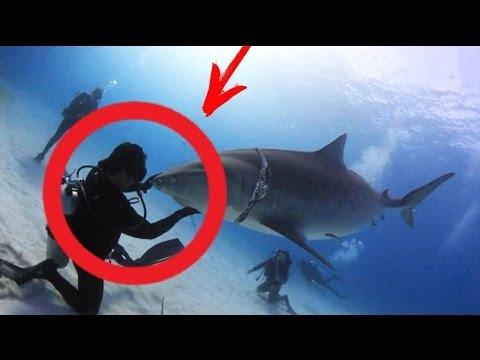 Дайвер спас акулу.