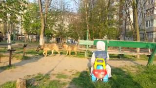 Видео ПН: в Николаеве бездомные собаки терроризируют маленьких детей