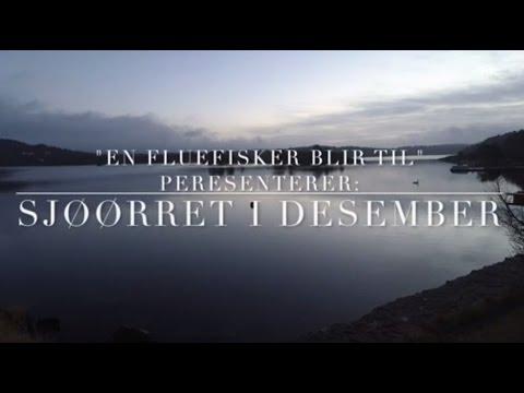Sjøørret Desember 2016 Sørlandet
