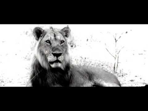 Pride: Lion conservation alliance