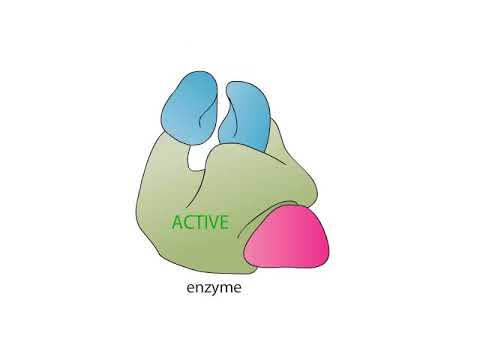 Allosteric regulation of enzyme CSIR NET, SET, Bology, Life sciences