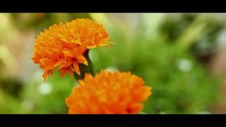 An Ode To Nature | Documentary Film | Directed By Gokul KV & Vishnu Vinod