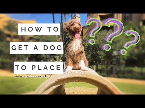 Dog Training 101 Basic Obedience What Is The Place Command & How To Get A Dog To Stay On Place