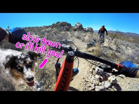 This trail dog is gonna eat me | Mountain Biking in Beatty, Nevada