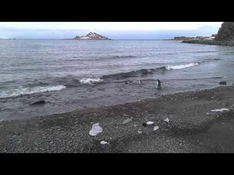 Penguins on King George Island