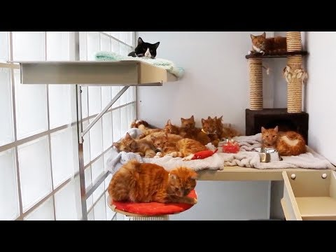 UPDATE: 11 Cats Left to Die in Sealed Boxes...