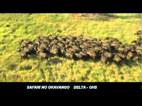 Safari no Okavango Delta Travel Video