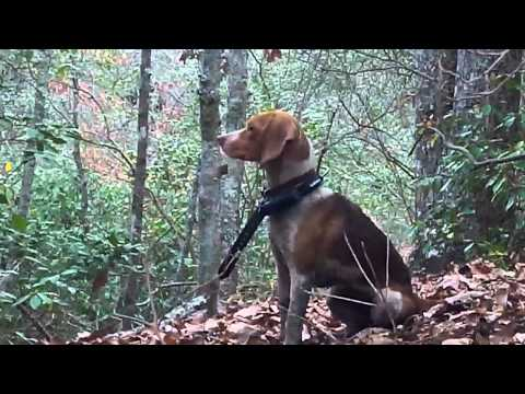 hunting with dogs in charles city virginia