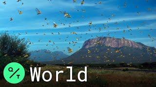 Worst Locust Outbreak in 25 Years Hits Ethiopia, Somalia and Kenya