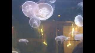 Jelly Fish at the Houston Zoo