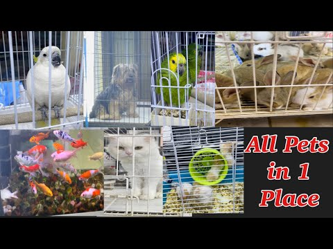 Pet Shop | All Pets in One Place | Abu Dhabi Animal Market |