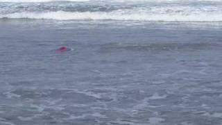 ToysPort Joker does backflips in the ocean!!! Boca bearings Airtronics Maxamps Novak