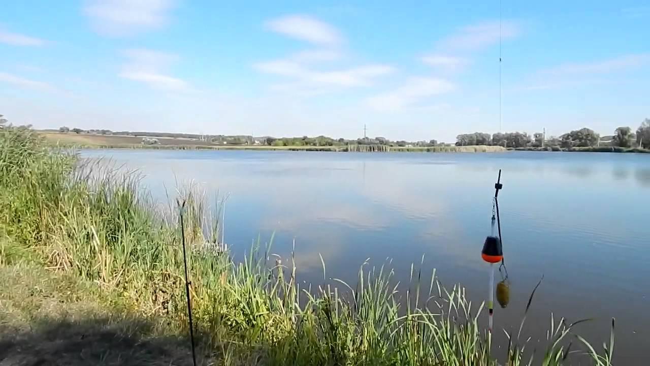 ловля толстолобика на технопланктон в мае видео
