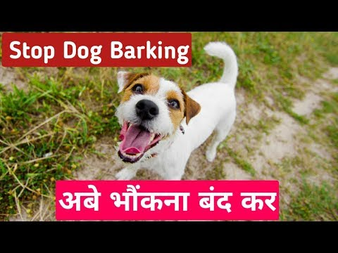 how-to-quickly-stop-dog-barking-!-dog-trick-2019-!-exclusive-dog-tutorial-|
