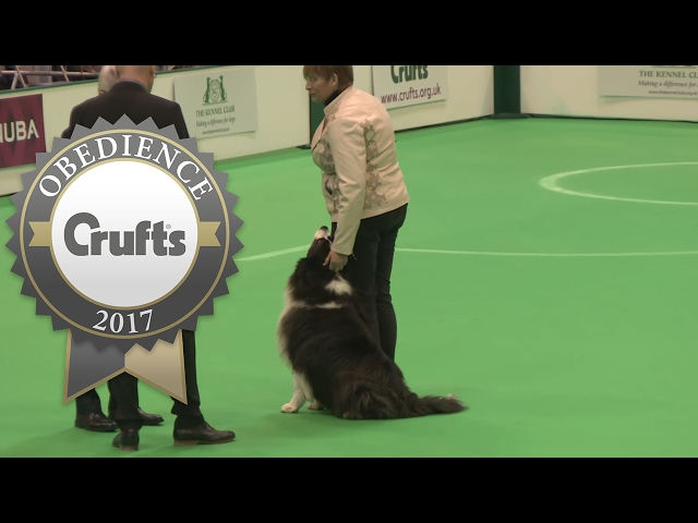 Obedience Championship - Dogs - Scent - Part 5 | Crufts 2017