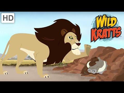 Wild Kratts - Best Wildlife Experience #2 | Kids Videos