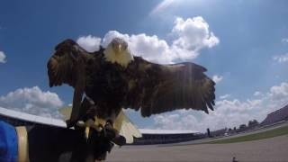 "2016 Indy 500- Challenger the Bald Eagle flies during ""God Bless America"""