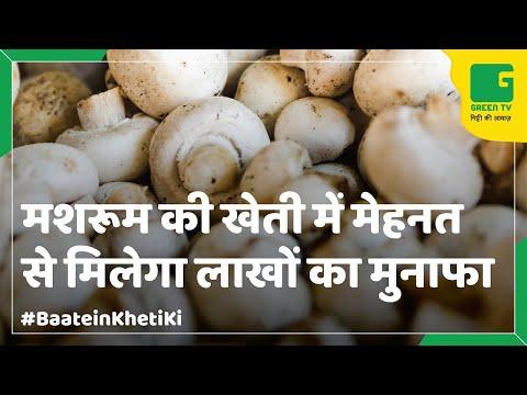 Mushroom Farming (मशरूम की खेती)  In Baatein Kheti Ki - On Green TV