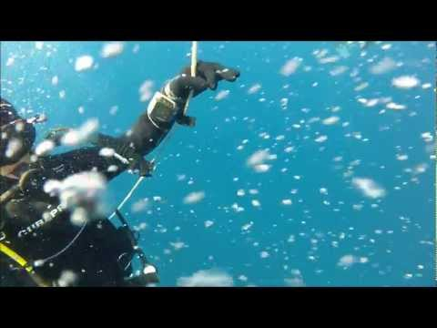 20m SCUBA Diving Cap D'Agde, France GoPro HD Hero 2