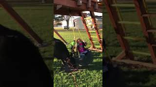 Video Cow pushing kids on tire swing download MP3, 3GP, MP4, WEBM, AVI, FLV Januari 2018