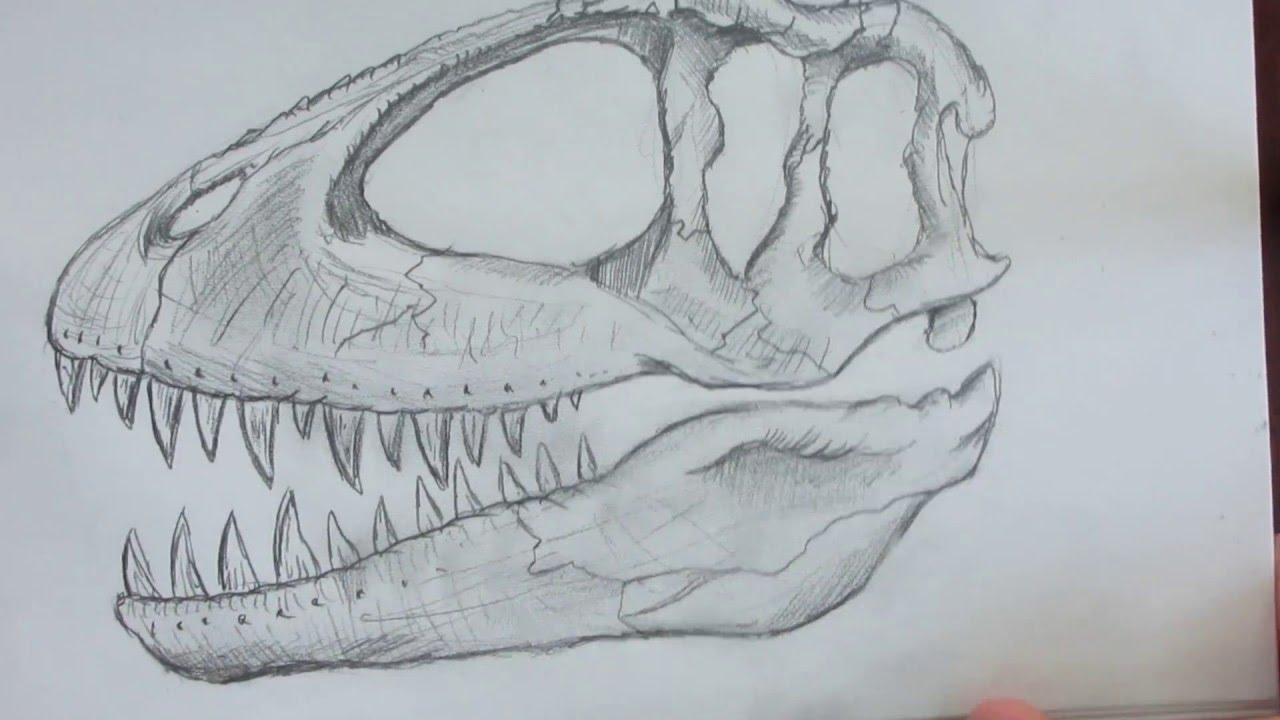 Speed Drawing A Dinosaur Skull Danny The Dinosaur Drawer Youtube