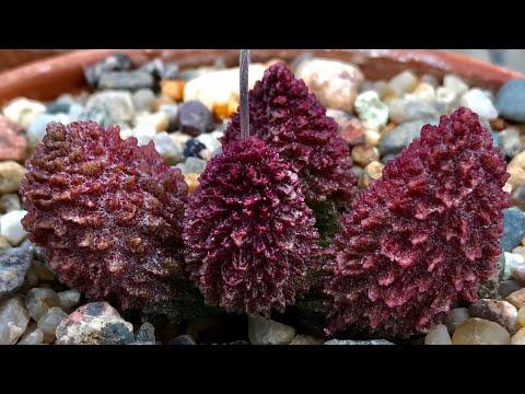 Цеолит для растений и другие компоненты минерального субстрата