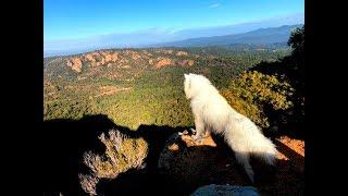 Дойдут ли собаки улыбаки по скале к мосту между вершинами?