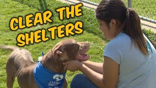 Clear the Shelters 2016