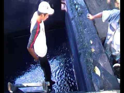 Extracción Del Añil En Niltepec, Oaxaca. De La Pileta Al Pozo
