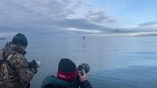 Alaska Eagles & Songbirds