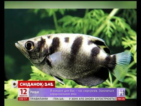 4ef23aee1fc71c Акваріумні рибки вміють розпізнавати обличчя - YouTube