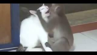 Страстная любовь!  Приколы про животных 2013! funny video joke in new 2013!
