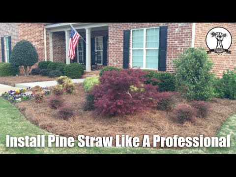 Diy Spread Pine Straw Like The Professionals Tutorial